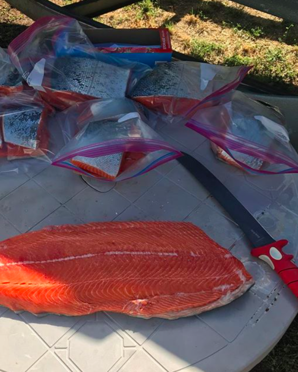 These salmon are in excellent shape. Thick and oily with krill stained meat. These processed salmon in the picture came from J. Pearl Guide Service 707-536-3984