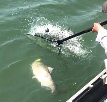 2017 salmon season plug fishing on the Feather River