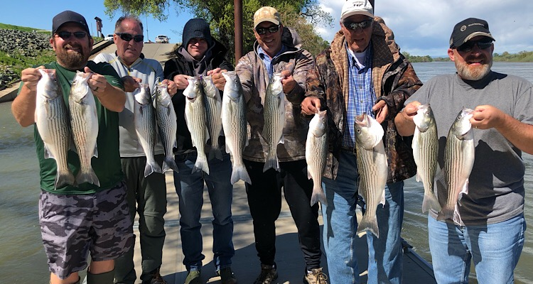 Happy clients with a full days striped bass limits on the Feather River near Yuba City, California.