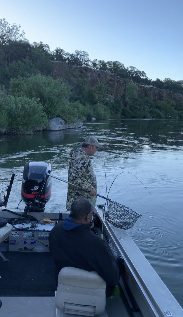 Dave Jacobs of  www.sacramentofishing.com  prepares to net a American Shad being fought by client Bruce, from Corning, Ca. June 20, 2019.