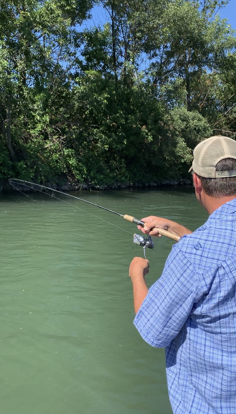 Sacramento River Fishing Guide Dave Jacobs of  sacramentofishing.com  fights a American Shad on his G-Loomis  gloomis.com  Shad/Rainbow Trout rods.