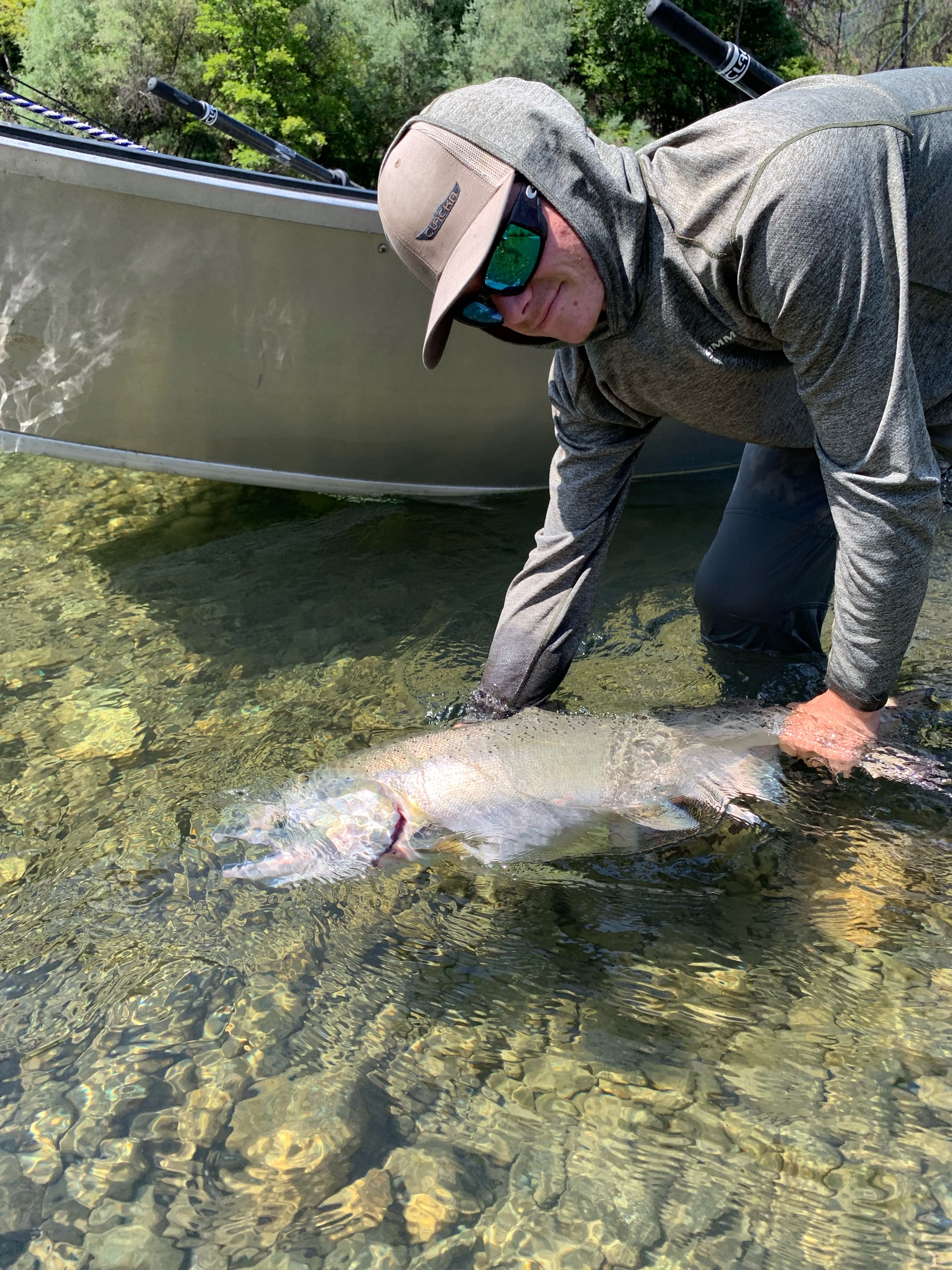 Salmon fishing guide Ryan Tripp reviving and releasing a beautiful Trinity River spring run chinook salmon. July 8, 2019