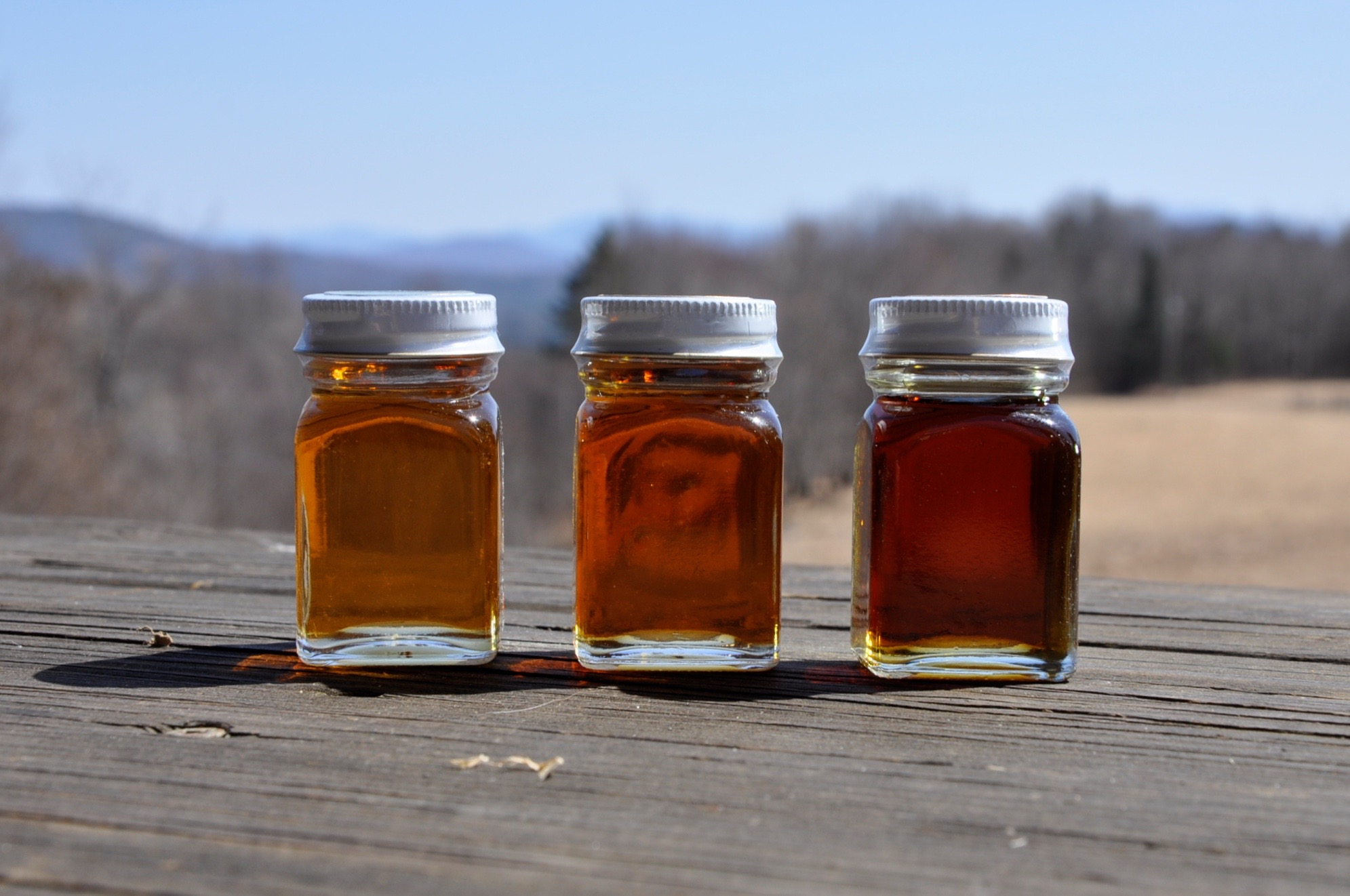 Vermont Maple Association samples of grade color for comparison. For more information about the new grading system, check out this  article in Forbes Magazine.
