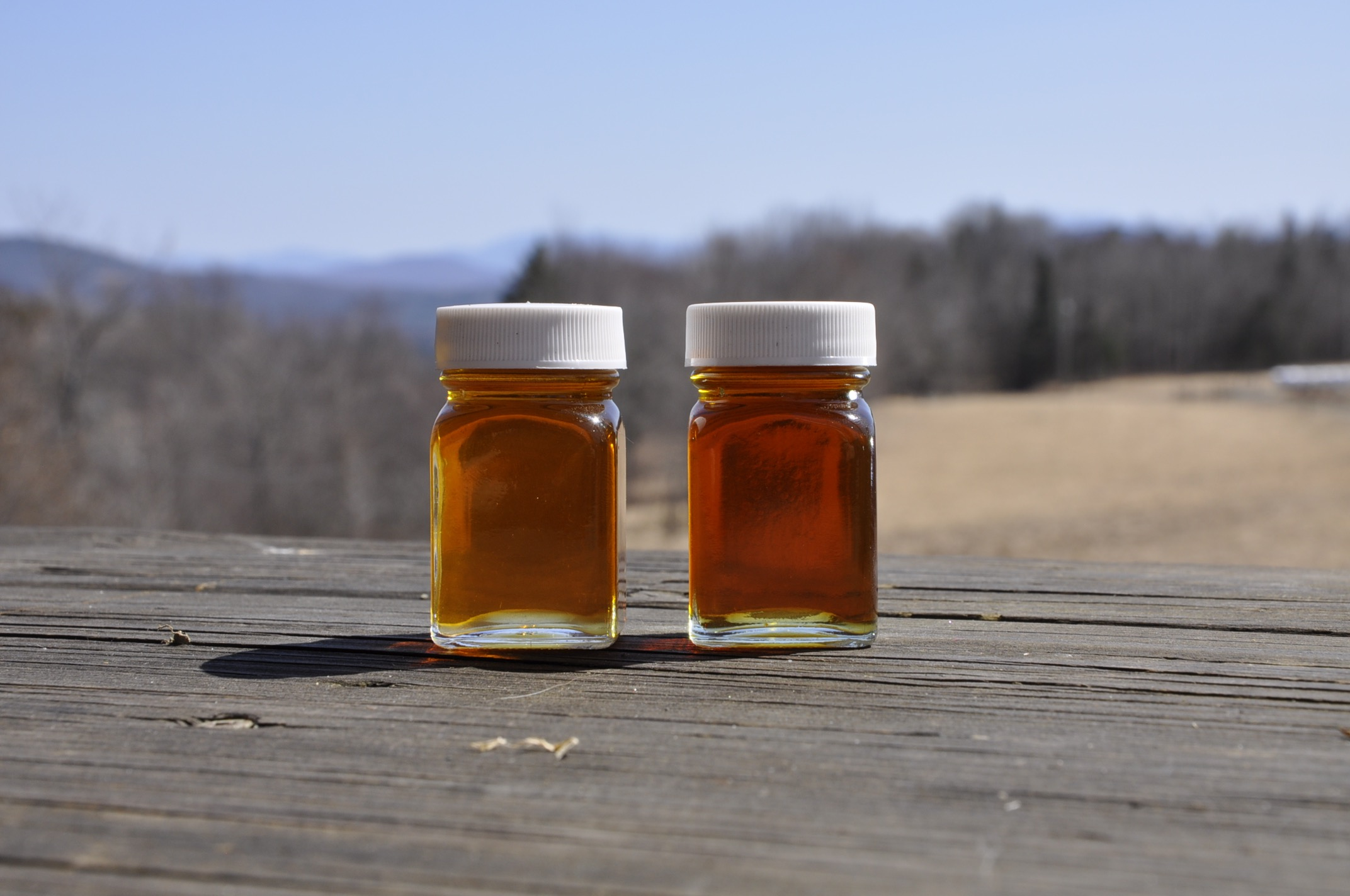 Our syrup  falls into 2 grades this year: Grade A Amber Color, Rich Taste Maple Syrup  (left)  and   Grade A Dark Color, Robust Taste Maple Syrup  (right).