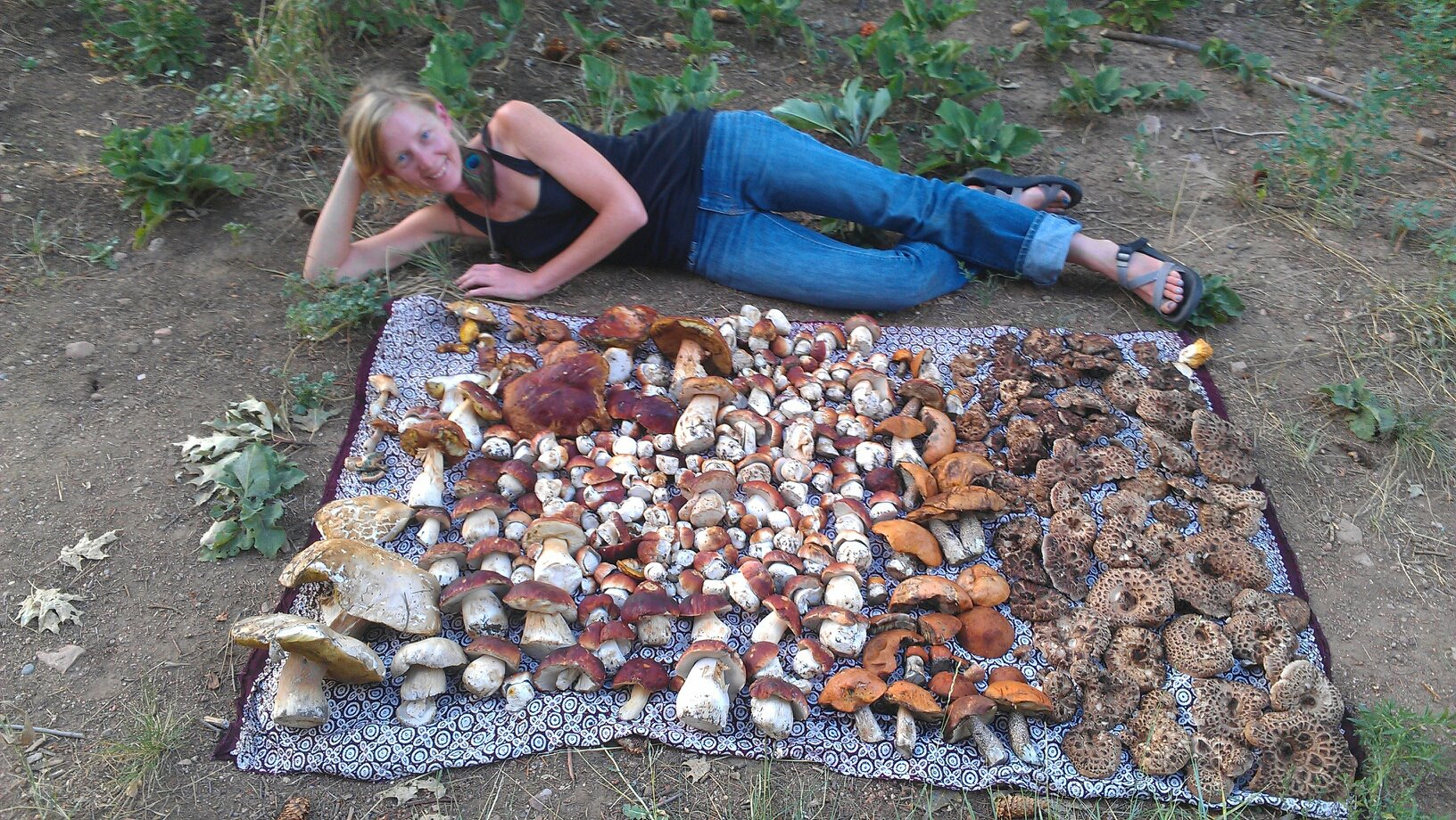 Wild about mushrooms...