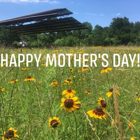 Hope all the moms out there are enjoying this lovely Sunday!