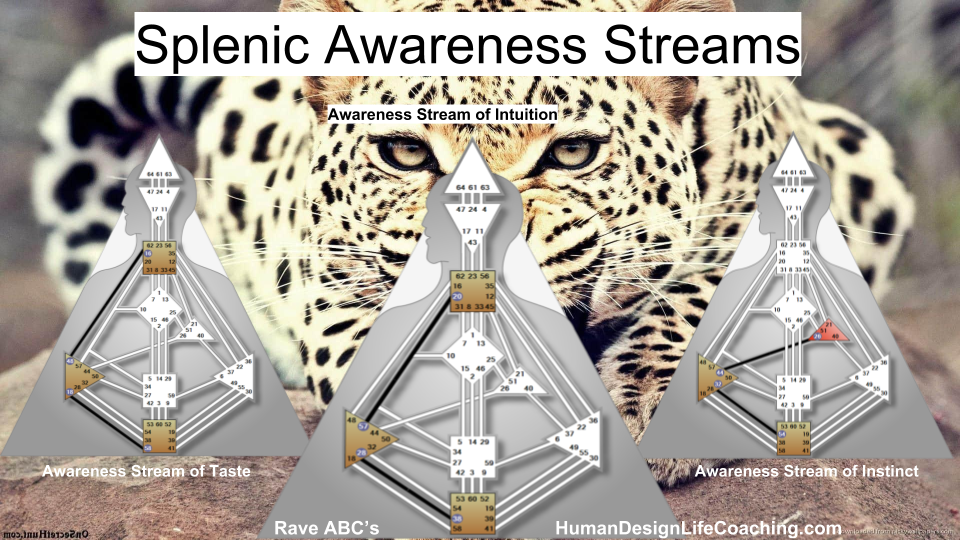 Splenic Center Streams of Awareness - Learn more in Rave ABC's