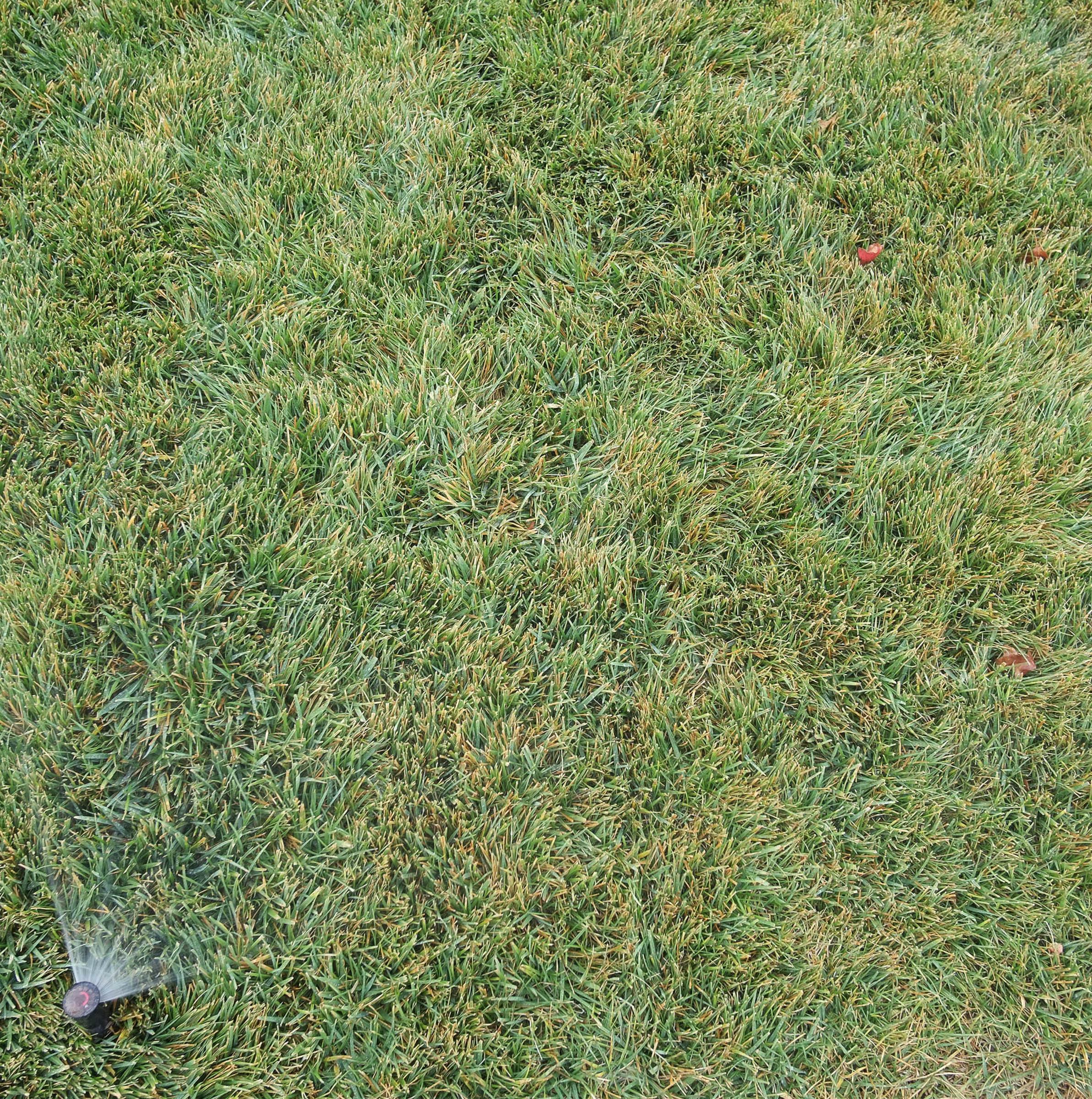 wetgrass.jpg