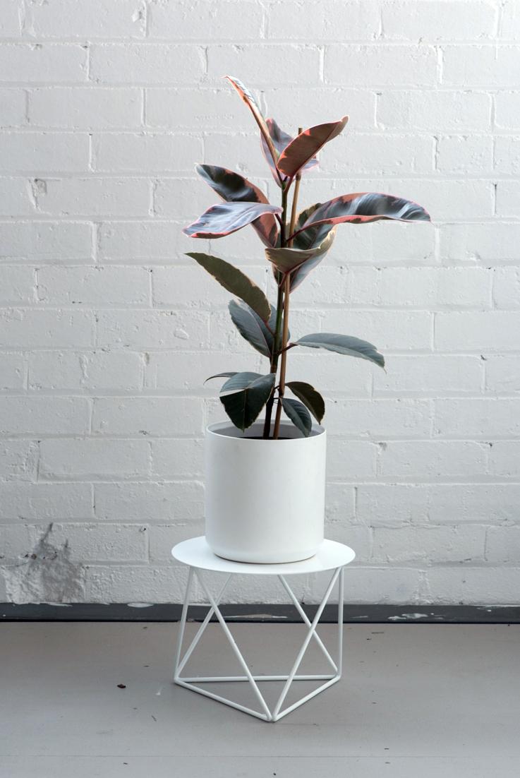 Low Tri_Plate_White_Plant.jpg
