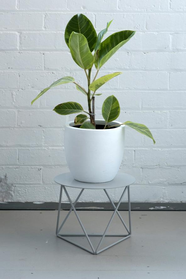 Low Tri_Plate_Grey_Plant.jpg