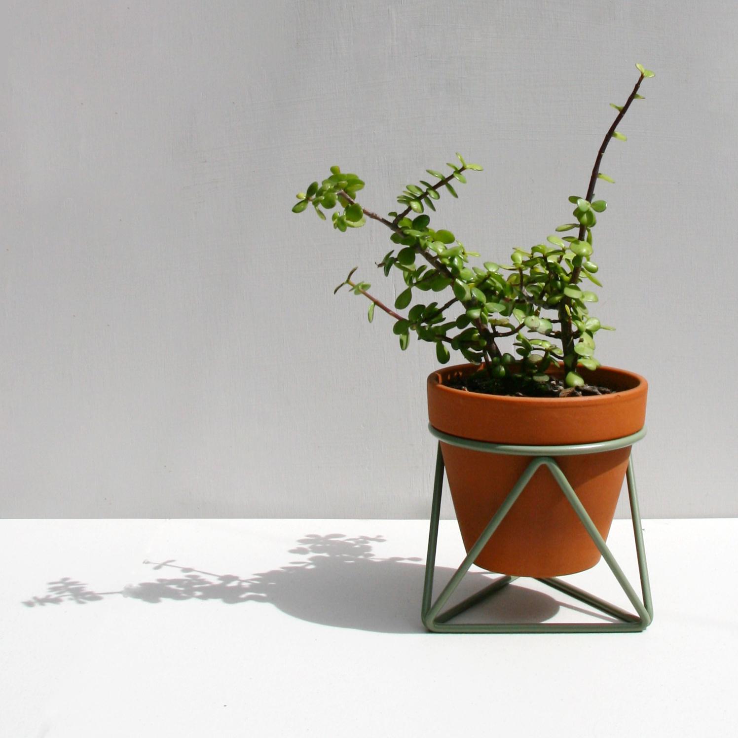 Mini Tri_Euclapytus_Plant.jpg
