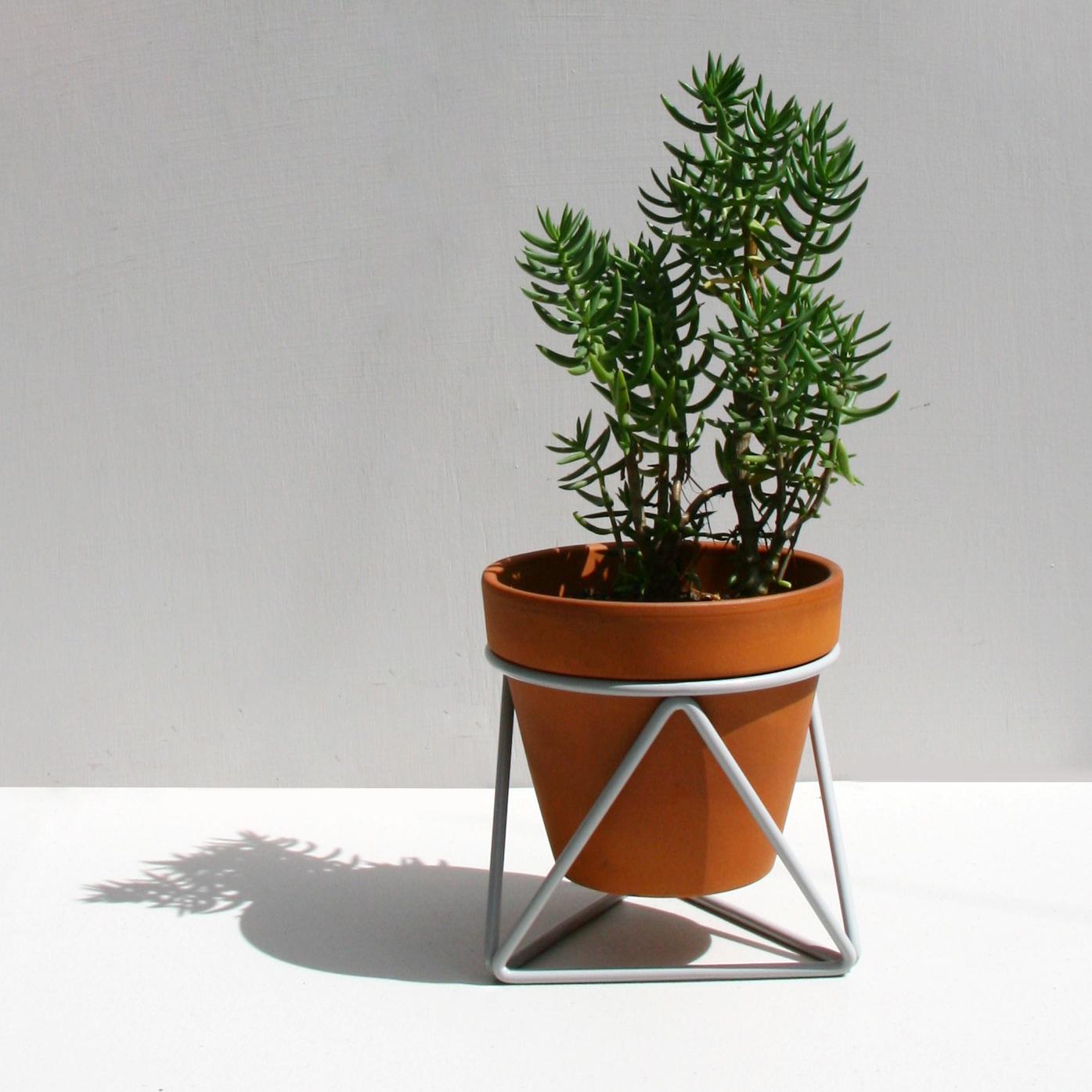 Mini Tri_Grey_Plant.jpg
