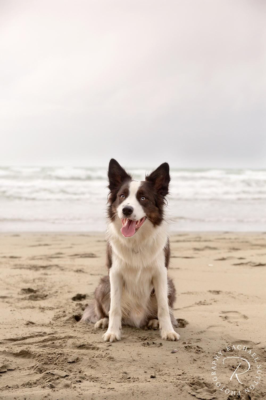 Rachael Sutton Pet Photography New Zealand57.jpg