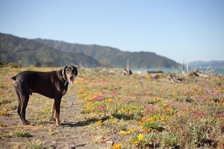 Rachael Sutton Pet Photography New Zealand15.jpg