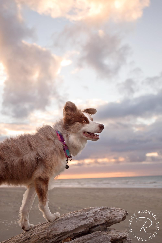 Rachael Sutton Pet Photography New Zealand69.jpg