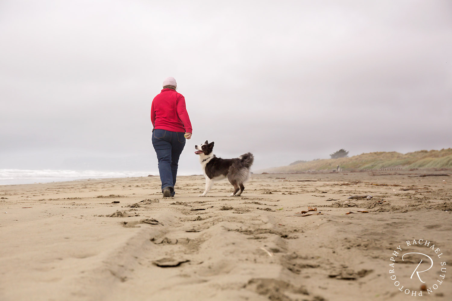 pet photo, Border Collie, dog and owner on the Brighton Beach in Christchurch