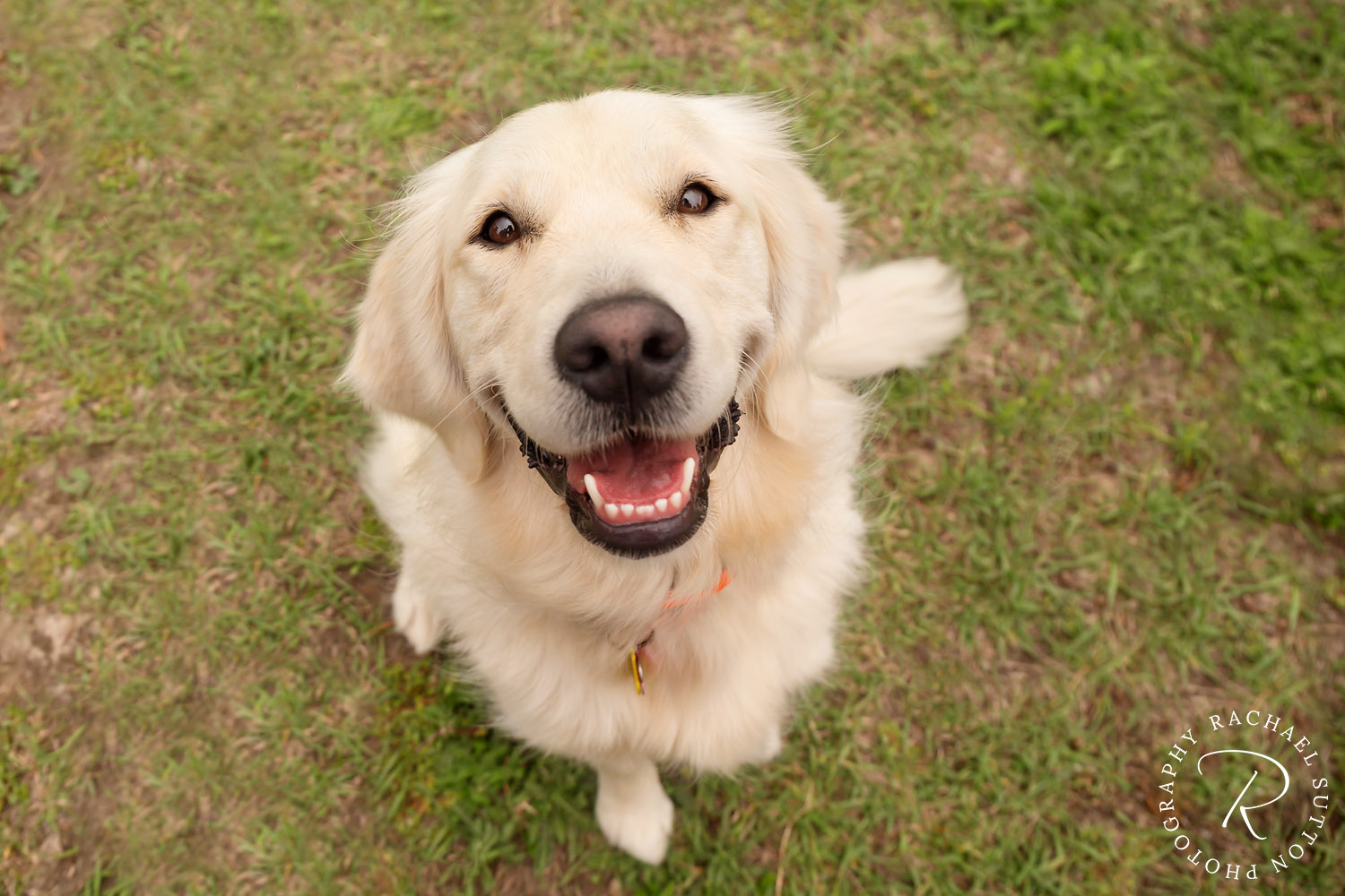 animal photography, dog with big smile