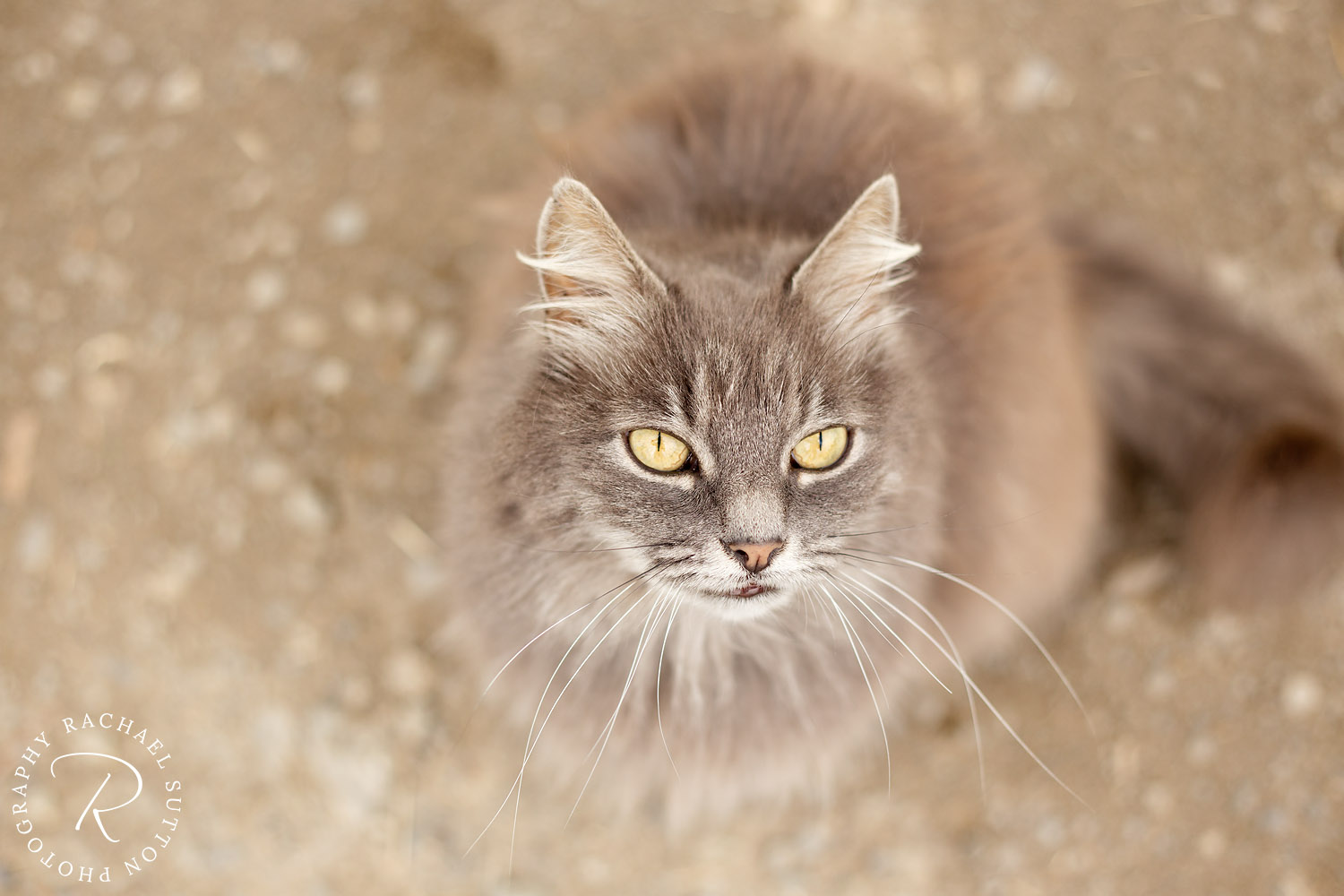 Cat photography, Cats eyes and whiskers