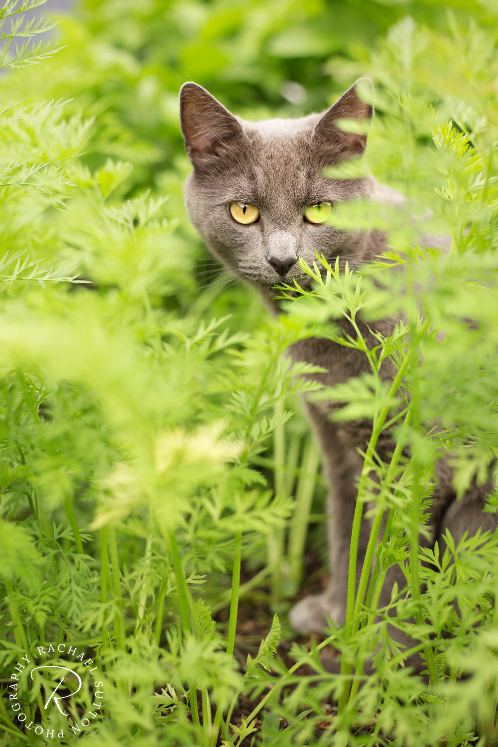 cat photo, cat in the grass, cat photography