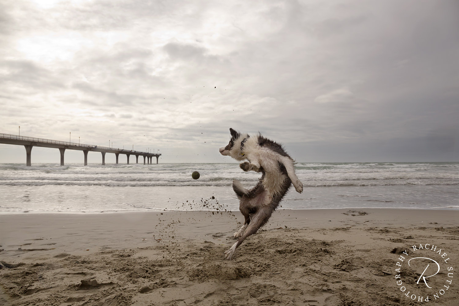 dog jumping to catch ball on beach, dog photo