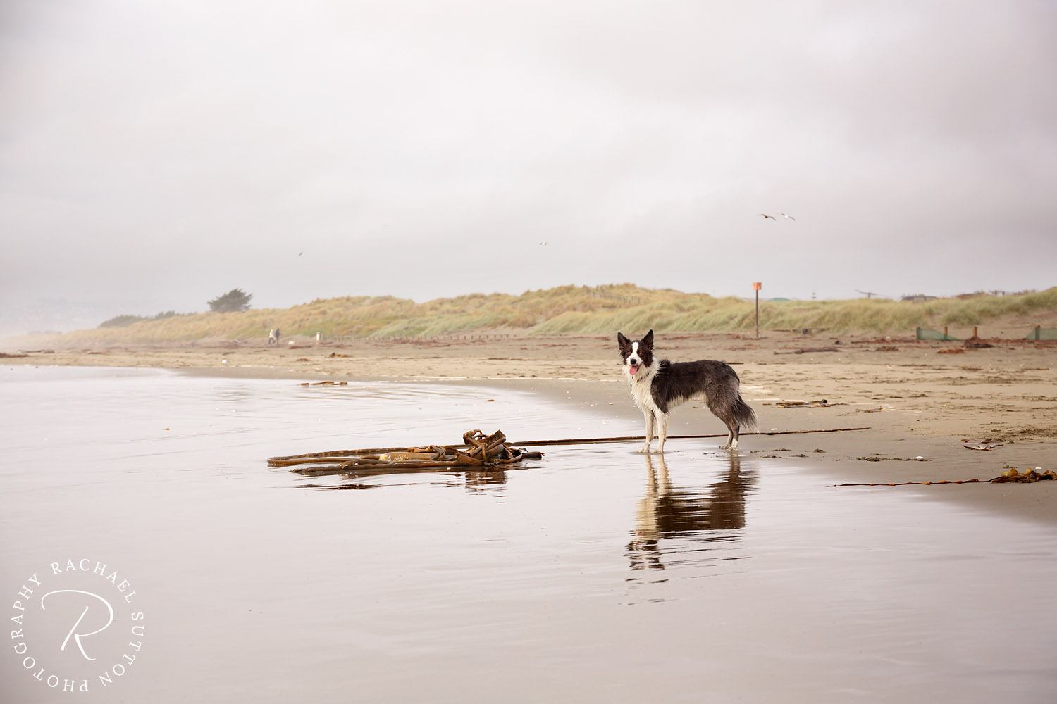 dog on beach in rain, dog photography