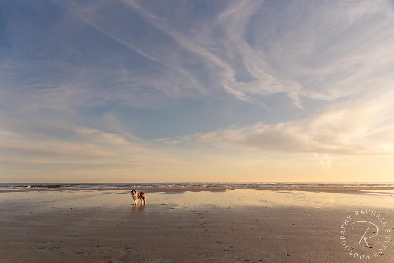 Sunrise West Coast Beach New Zealand
