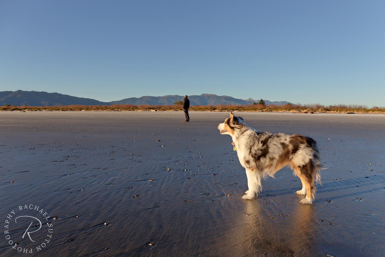 windy west coast New Zealand, dog on beach