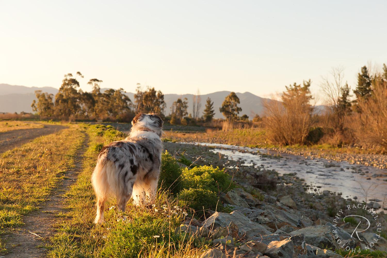 Taylor River Dog Walk Marlborough Pet Photography