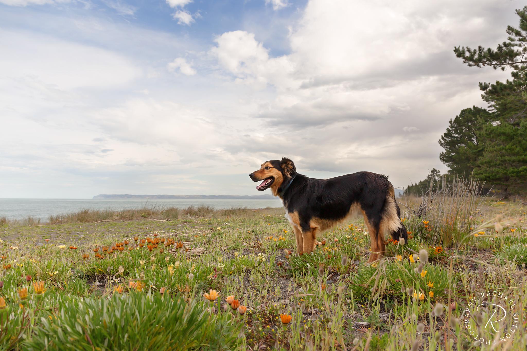 DogphotoBlenheim