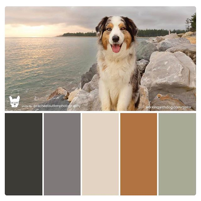 Another dog color palette from @workingwithdog (lucky last) I can understand how she is getting addicted to making them! It's neat to see what colors pop through. 💫I'm in love with the shimmering light across the sea and of course that happy cheeky face of hers 🐶she's so happy she managed to drag me out of bed for the sunrise... #dogcolorpalette #dogbrand #funwithcolor . . . . #rachaelsuttonphotography  #colortheory #colourpop #petphotography #petphotographer #dogbusiness #petbusiness #brillianteveryday #dogsofnz #workingwithdog #sunrises #milliondollardogbrand #australianshepherd #bluemerle #aussiesofinstagram
