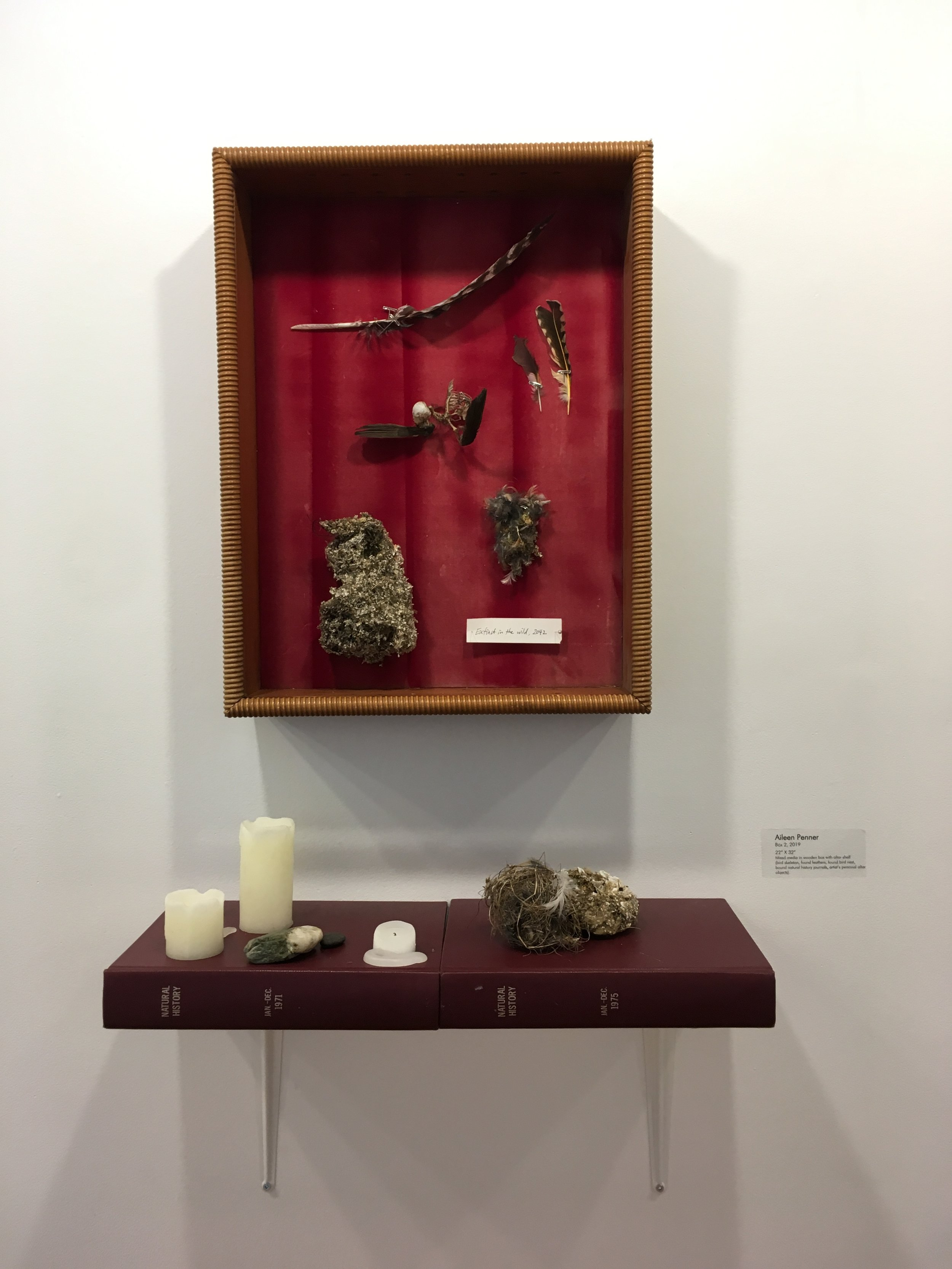 """Box 2, 2019 22"""" X 32"""" Mixed media in wooden box with altar shelf (bird skeleton, found feathers, found bird nest, bound natural history journals, artist's personal altar objects)."""