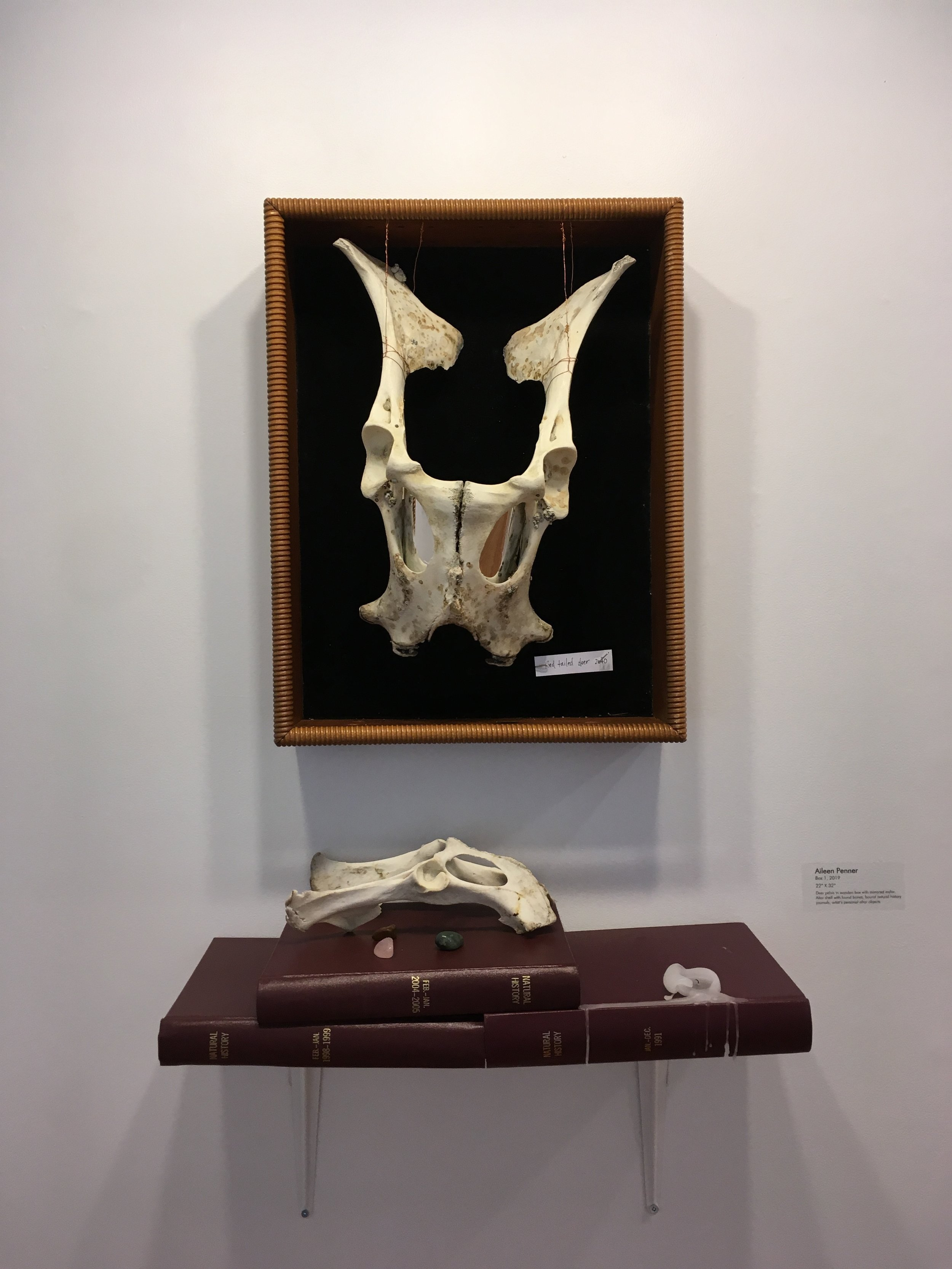 """Box 1, 2019 22"""" X 32"""" Deer pelvis in wooden box with mirrored mylar. Altar shelf with found bones, bound natural history journals, artist's personal altar objects."""