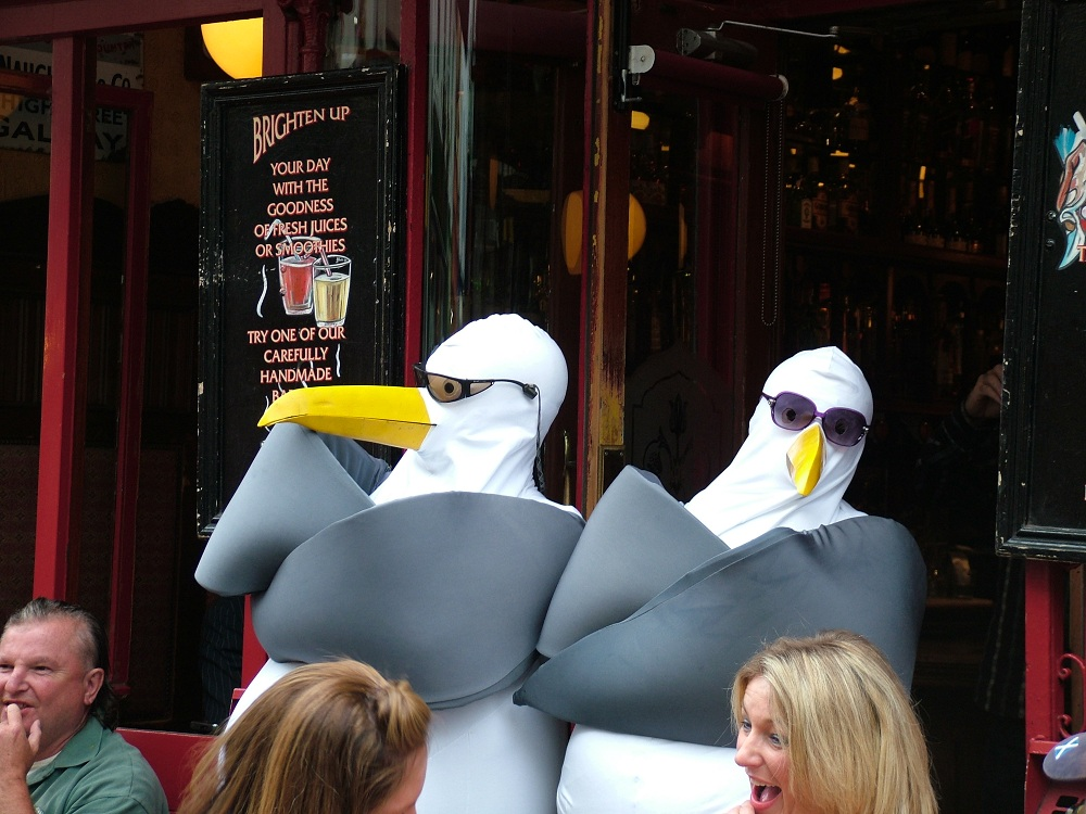 Seagull Bouncers in Galway 2010.jpg