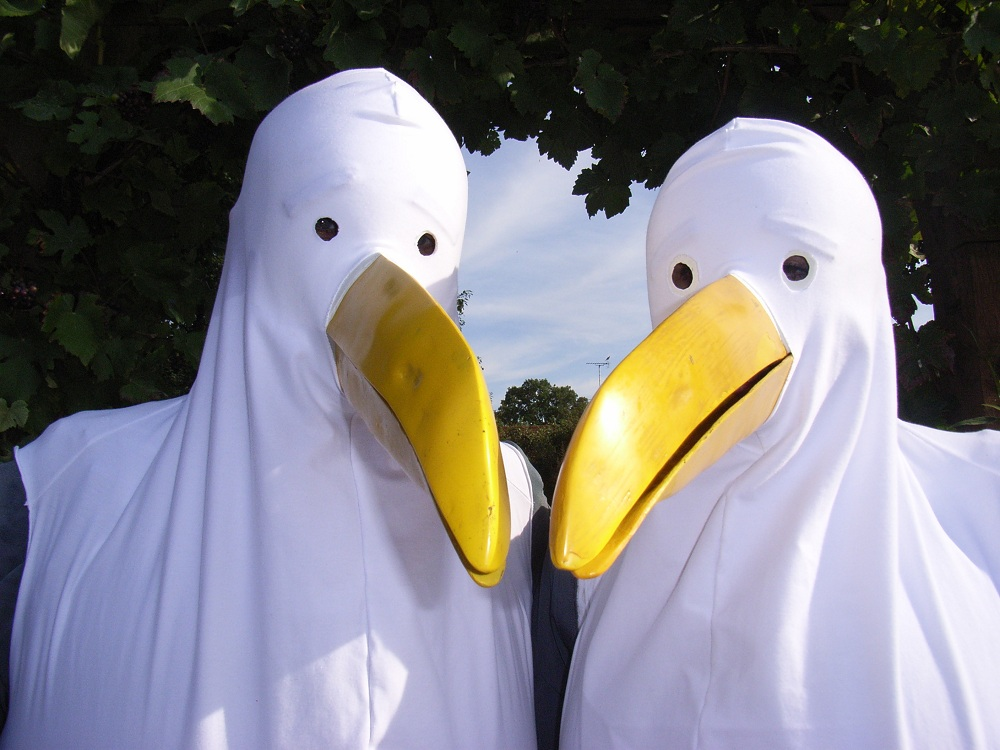 Seagulls in Witham 2010.jpg