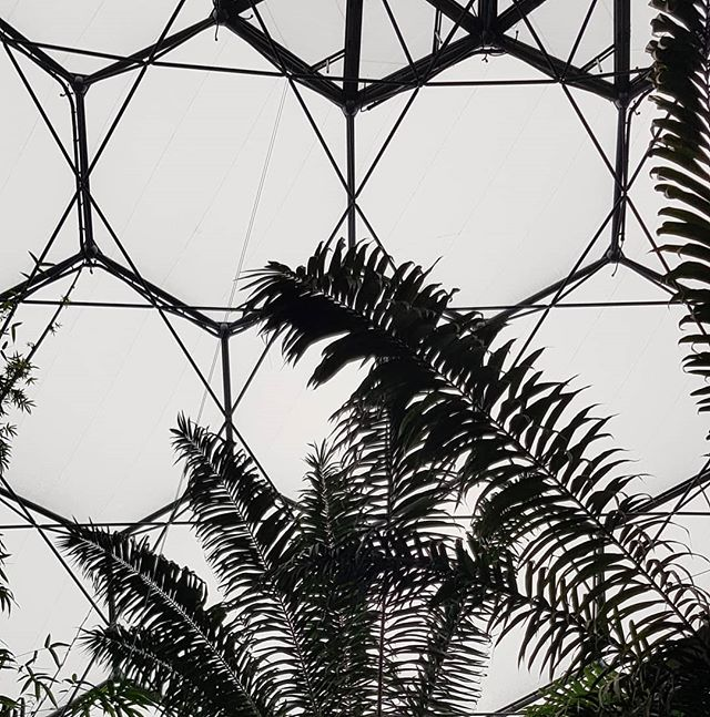 Eden Project - looking up in the rainforest biome
