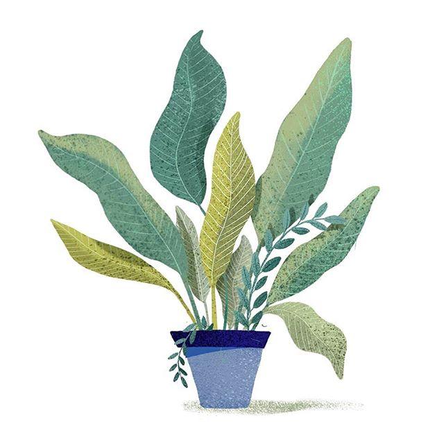 🌱 . . . #illustration #plant #drawing #sketch #plantillustration #houseplant #illustratie #postcard #antwerp #prints #poster #illustrationart #illustration_best #card #procreate #adobe #lauramuls #illustrationgram #flora #doodle