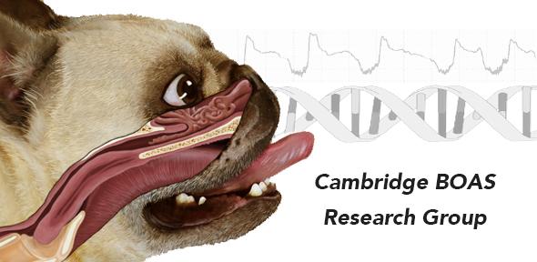 Cambridge BOAS research group.jpg
