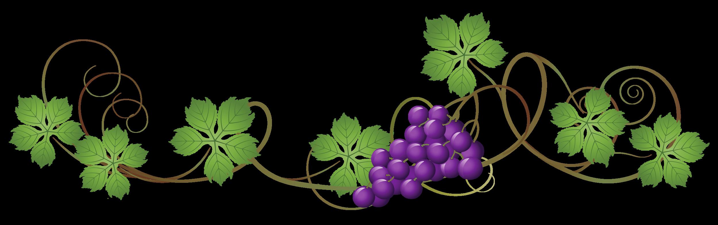 Vine_Decoration_PNG_Clipart_Picture.png