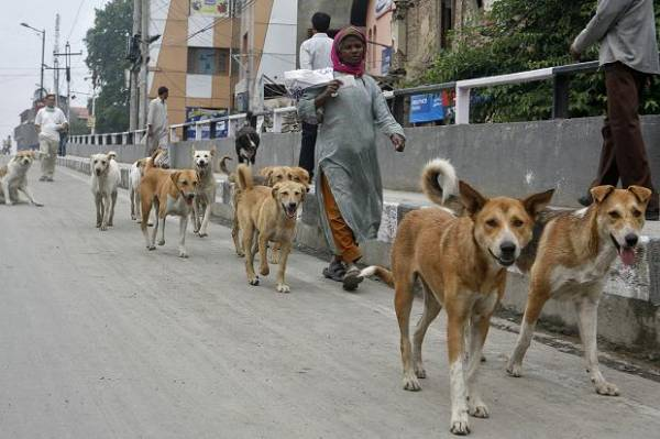 stray-dogs-to-form-security-squad-in-india-1407586316-5451.jpg_vac_PkYcsDk8.jpg