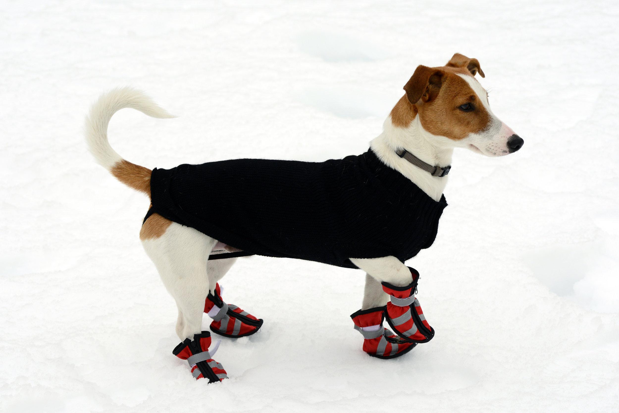 Dog Booties.jpg