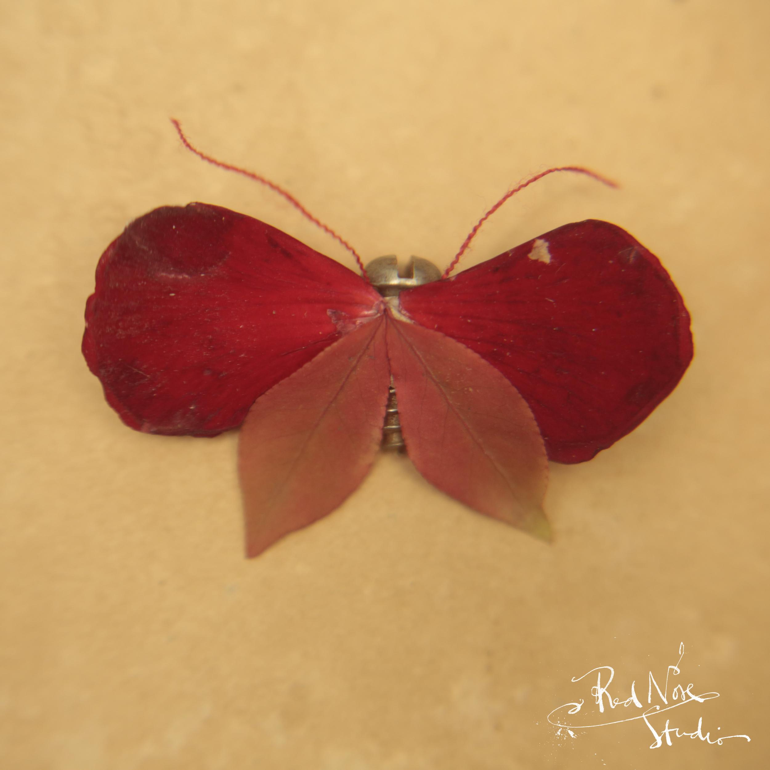 RedNose_MOTH_CrimsonGerainiumous.jpg