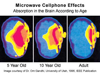 Brain-Image-High-Quality.jpg
