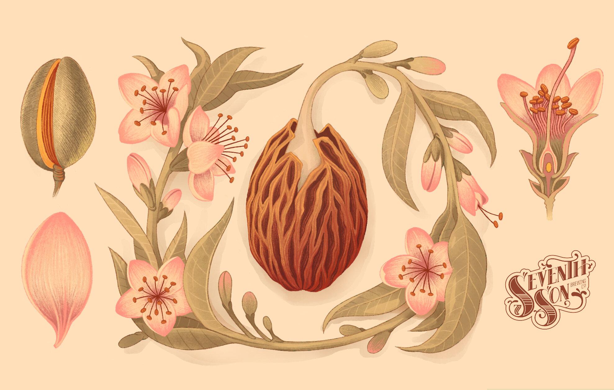Peach Blossom - 2019