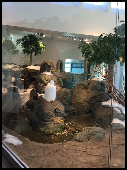 Aquarium of the Bay brought in hundreds of pounds of snow one winter as enrichment for their North American River Otters.  (Photo Credit: D. Estes)