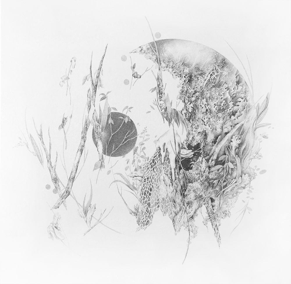 late months  a series of plant life created observing mottled light over underbrush  pencil on paper 2018