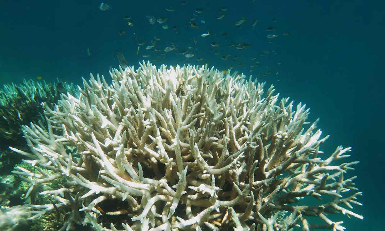 Bleached Coral Reef. The lack of age means that the reefs are completely drained of their nutrients and therefore colour.