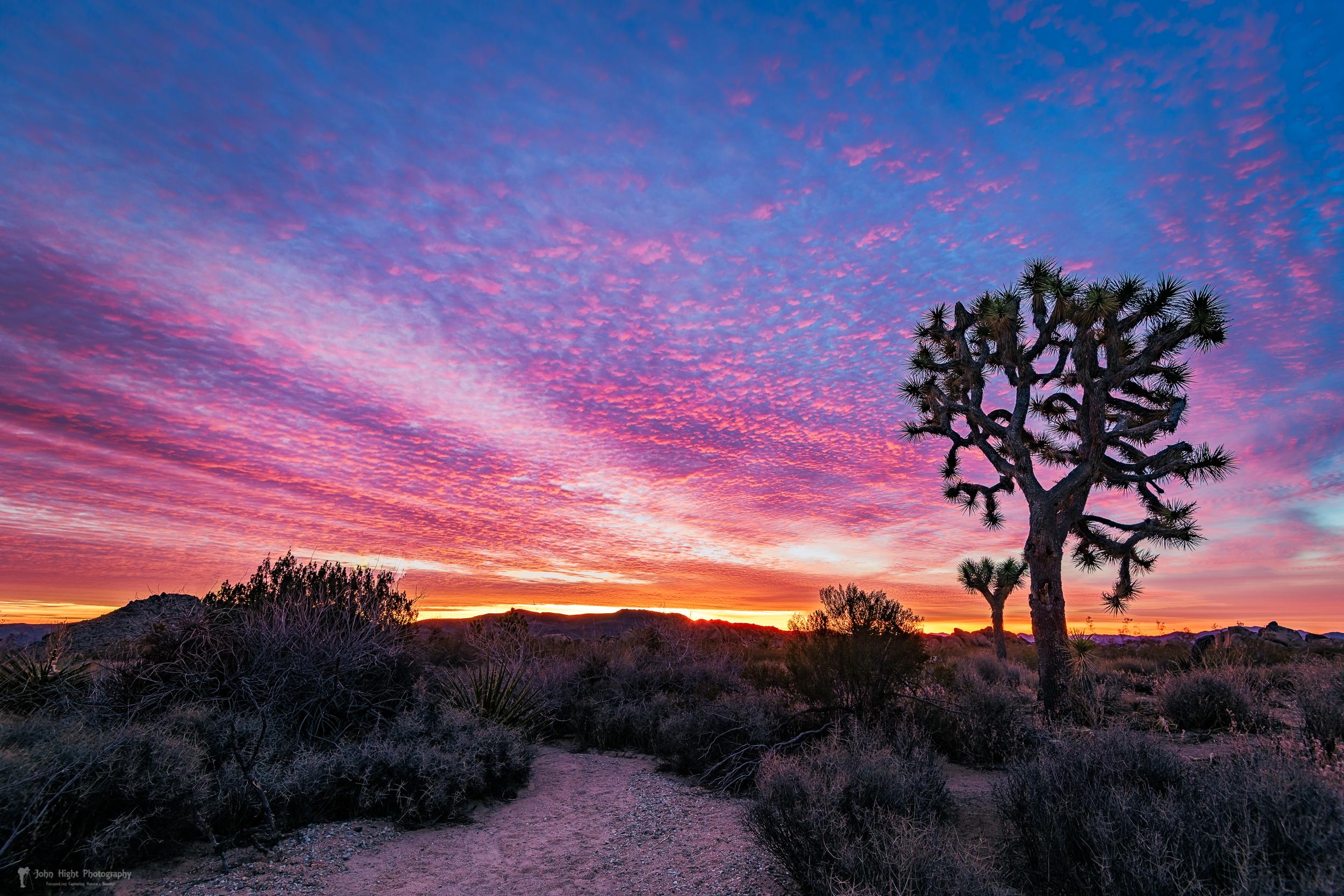 Desert Sunrise at Joshua Tree
