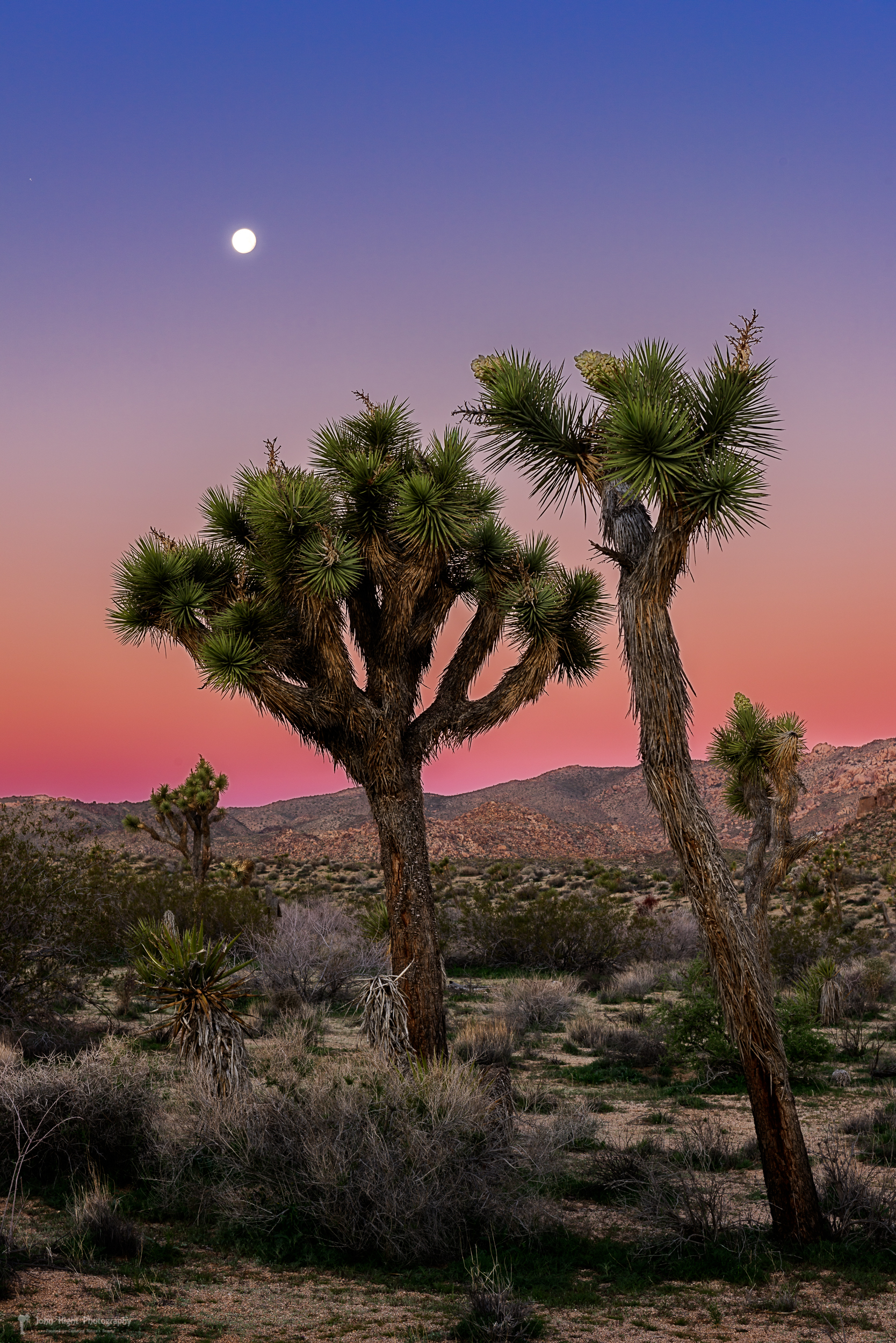 Moon Over Joshua Tree