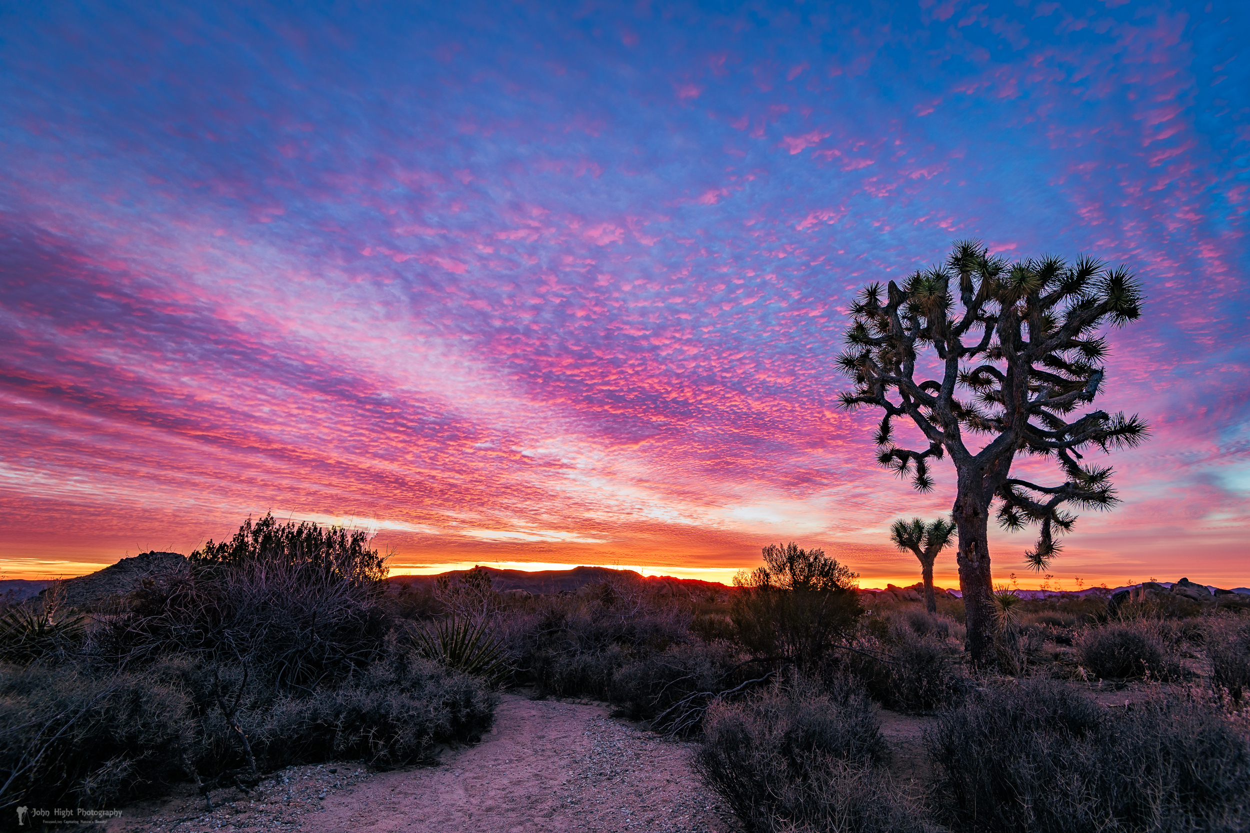 Desert Sunrise at Joshua Tree