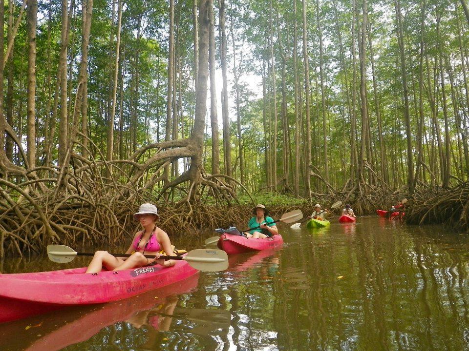 mangrovesgroup.jpg